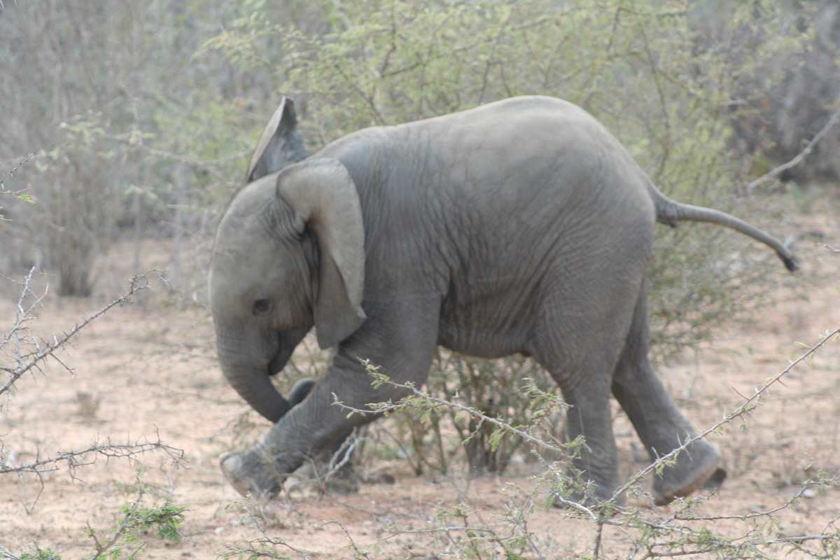 Silver_oak_tours_baby_elephant_01_